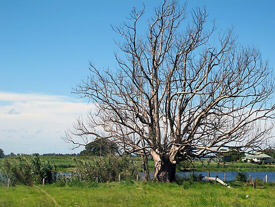 lithgow tree by Donovan Tillet
