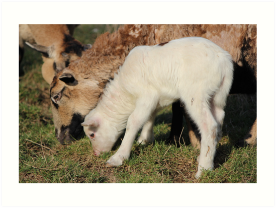 I Want Milk, Not Grass. by karina5