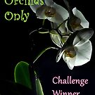 Winner banner Orchids Only by bubblehex08