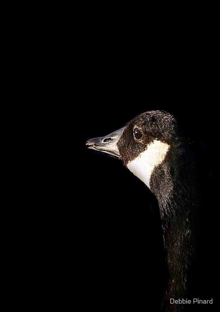 Canada Goose in Shadow, Ottawa Ontario by Debbie Pinard