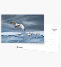 Thin Ice Postcards
