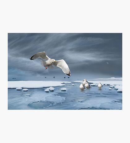Thin Ice Photographic Print
