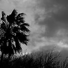 Blowin' In the Wind by teresalynwillis