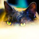 Mystery Cat Eyes  by evergleammm