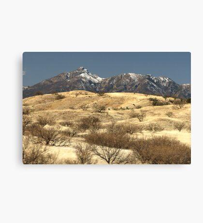 Desert Grasslands  Canvas Print