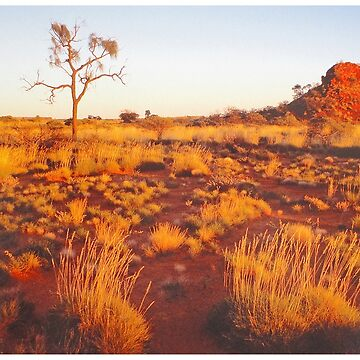 Spinifex, Sand, Sunset, Desert Oak and Stock Route. by GeorgeP