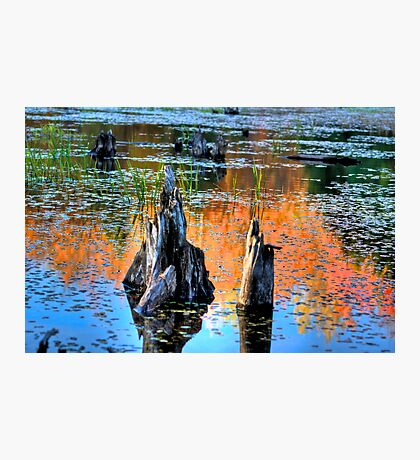 Fall Reflections Photographic Print