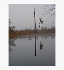 fog,Econfina Creek,wasp tree,cypress,swamp Photographic Print