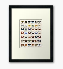 Butterflies of North America Framed Print