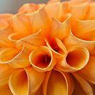 Tubular Petals by Ray Clarke