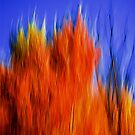 On Fire by Andre Faubert