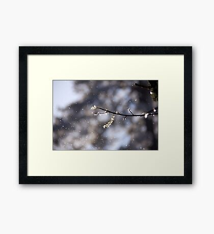 Winter perfection Framed Print