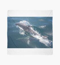 Dolphin Scarf