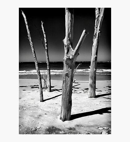Skeketon Tree, Sarasota 2012 Photographic Print