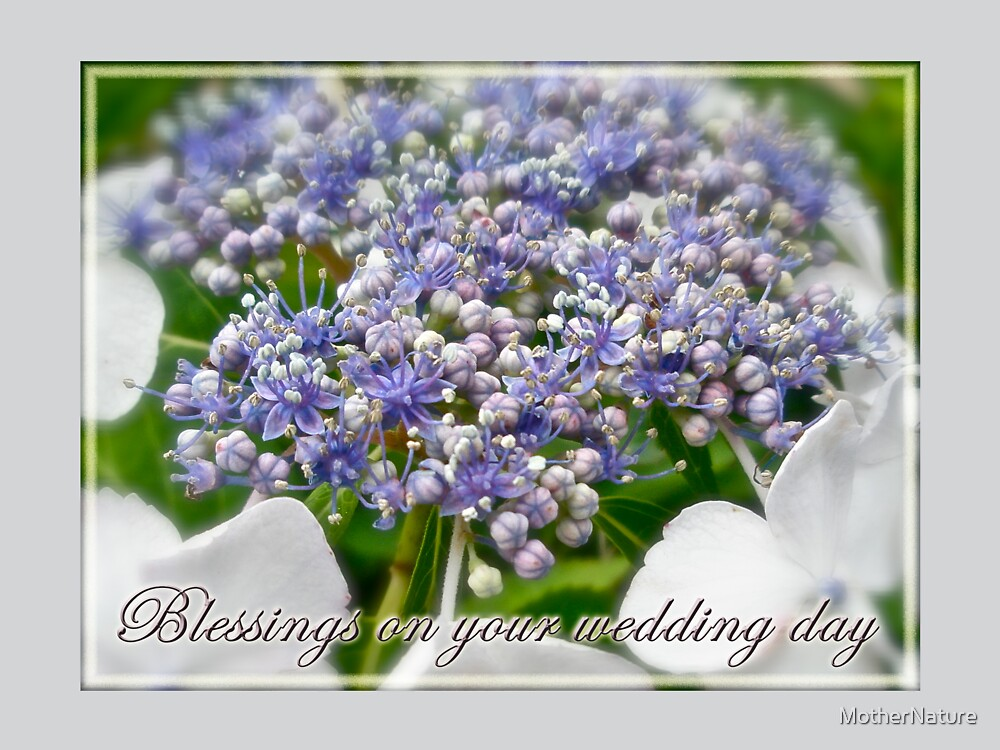 Blessings on Your Wedding Day Card - Blue Lace Cap Hydrangea by MotherNature