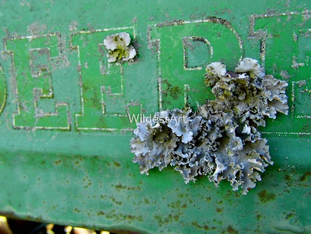 Lichens On The Deere by WildestArt