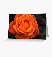 Yellow Pink Rose Greeting Card