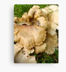 Fungus Frenzy 1 Canvas Print