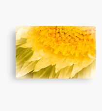 Paper Daisy Canvas Print