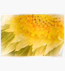 Paper Daisy Poster