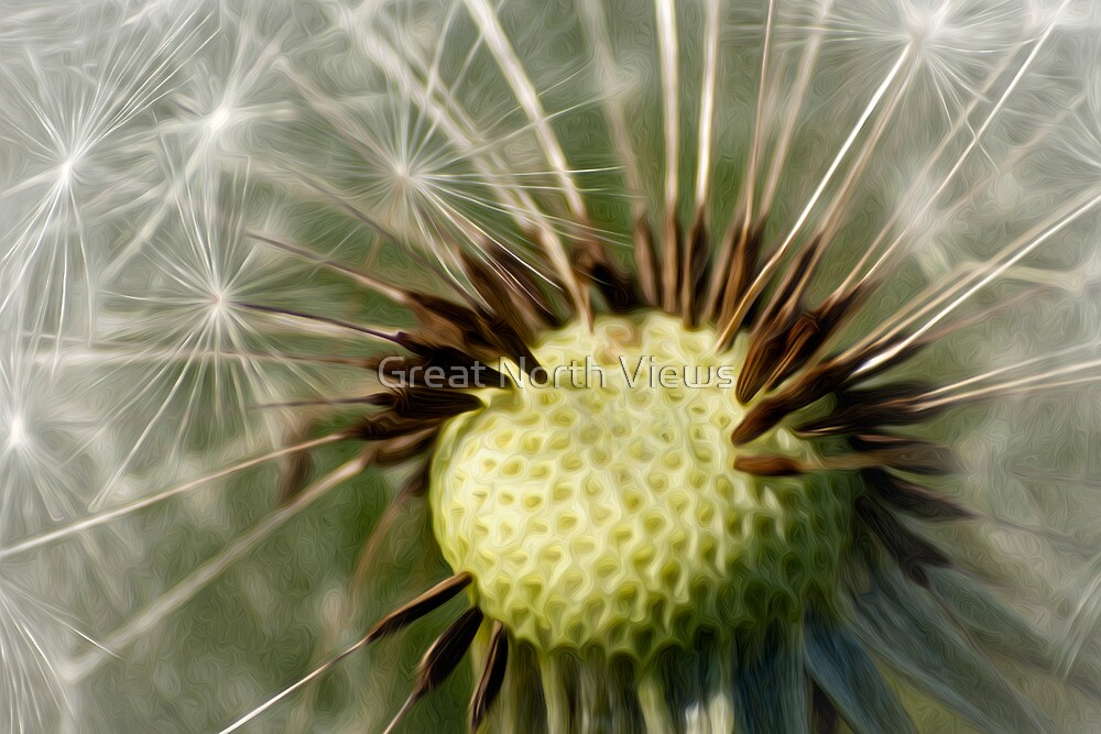 Painted Dandelion Clock by Great North Views