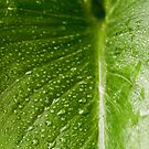 Leaf IV by Clockworkmary
