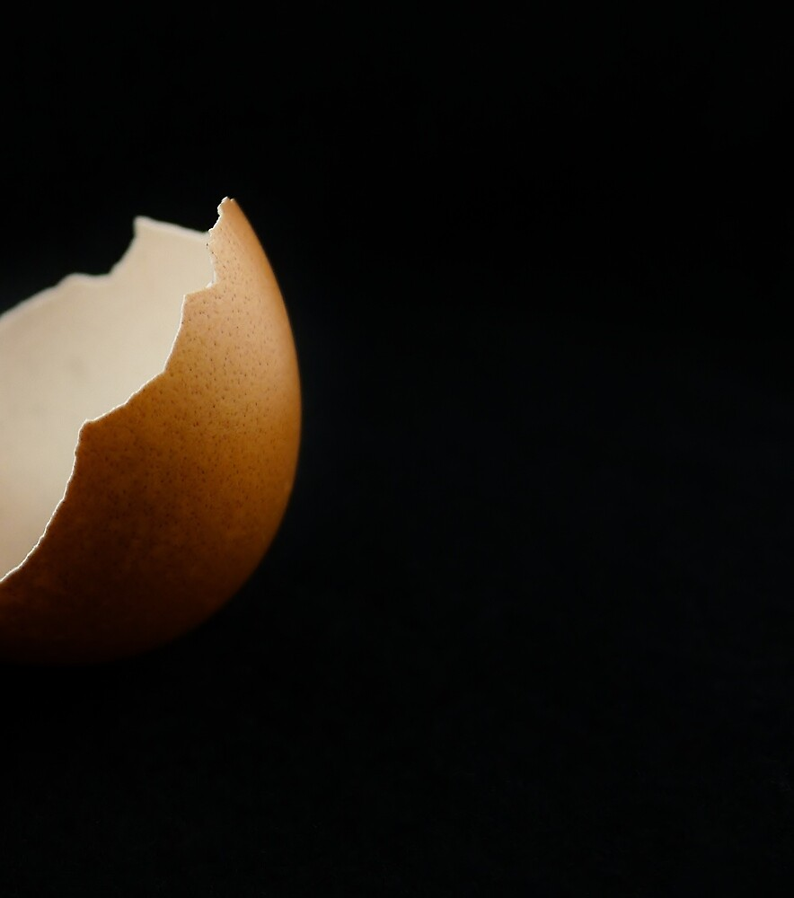 Egg on the Half Shell by Barbara Morrison
