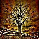 Creepy Tree by Andre Faubert