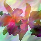 Easter Orchids by Don Wright