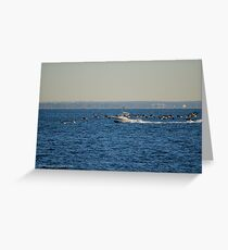 Branta Canadensis - Canada Goose | Orient Point, New York  Greeting Card