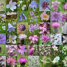 Argyll Wild Flowers: Mauve & Pink by cuilcreations