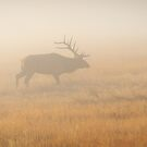 Elk and Fog by Teresa Smith