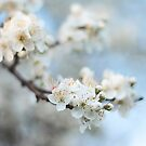 First Sign of Spring by Donna-R