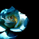 White Rose in Darkness by LydiaWoods