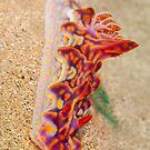 Nudibranch - Miamira magnifica by Andrew Trevor-Jones