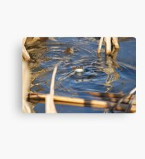 FROGS! Canvas Print