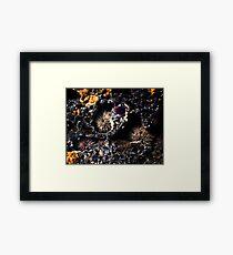 Sea Urchins Framed Print