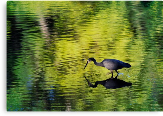 Wading Hunter - 2 by Sandra Chung