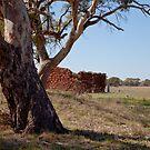The Big Tree by Gavin Kerslake