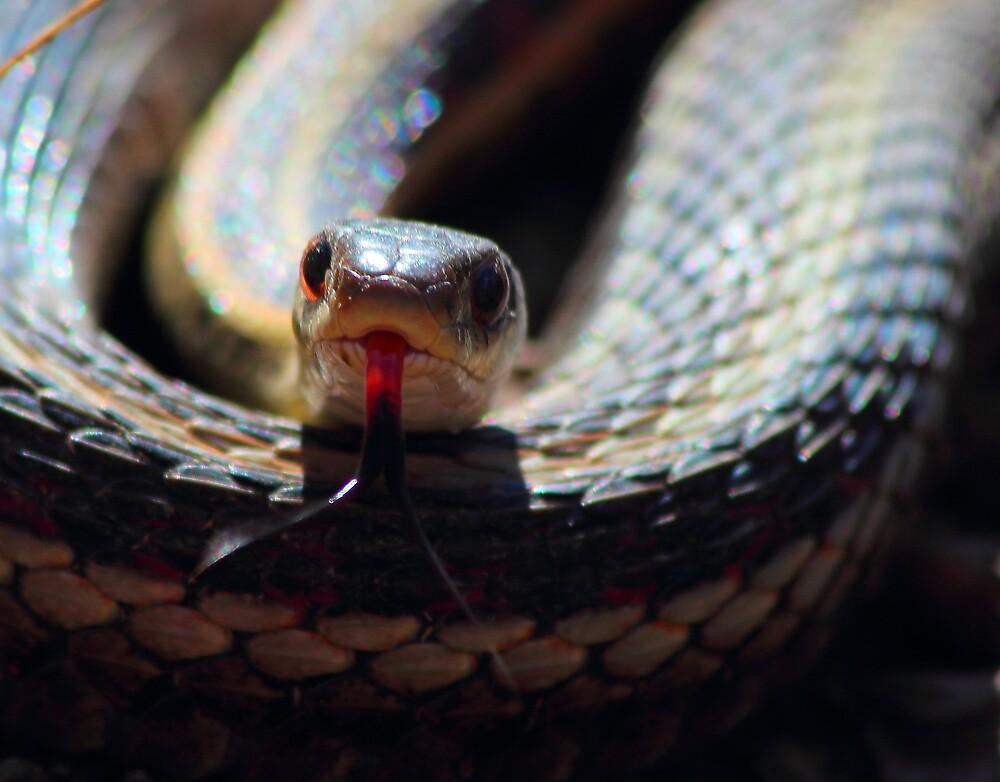 Snake Tongue by wanblake