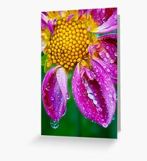 Weeping Dahlia - In Remembrance Greeting Card