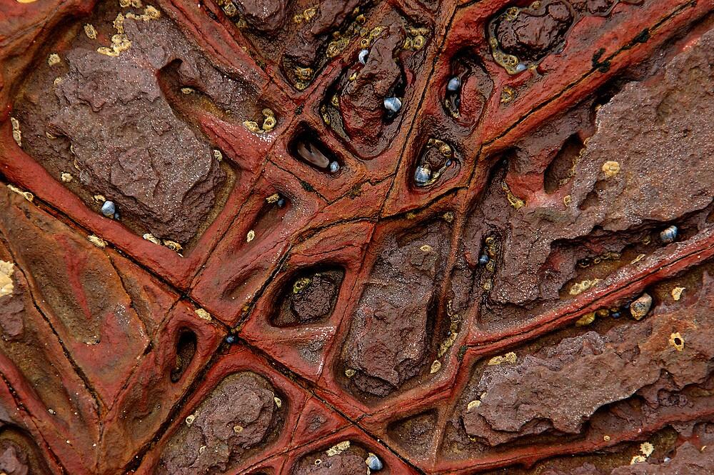 Rock veins 1 by Antonia  Valentine