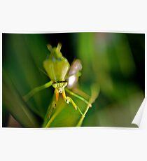 Praying Mantis 1. Poster