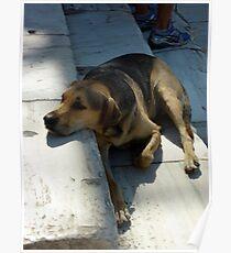 Athenian Dog at the Agora Poster