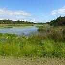 Autumn Wetlands by byronbackyard
