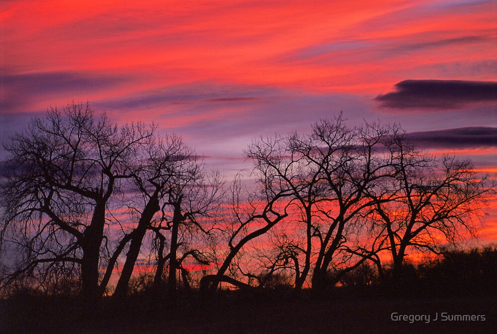 Sky Dance by Gregory J Summers