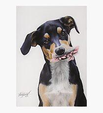 Max, Pastel Dog Portrait Photographic Print