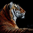 Burning Bright - tiger by Anne Zoutsos
