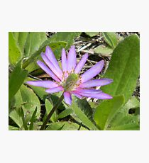 The Bright Windflower Photographic Print