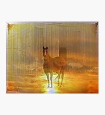 Haunted Horse Photographic Print